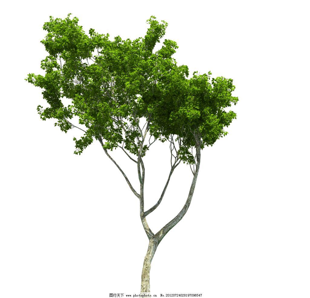 png素材 树图片