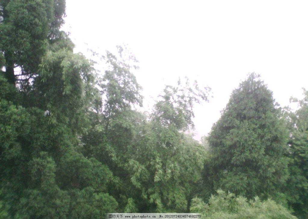 树木 高山 白云 美景 云雾 田园风光 自然景观 摄影 72dpi jpg
