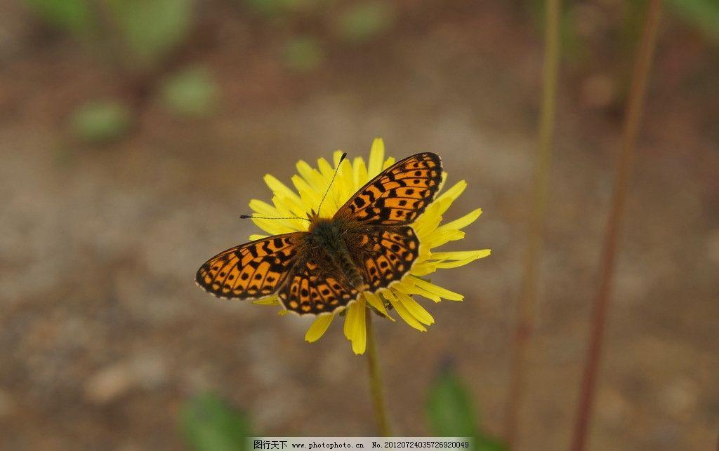 路边野花 黄色花朵 蝴蝶 树叶 花草 生物世界 摄影 350dpi jpg