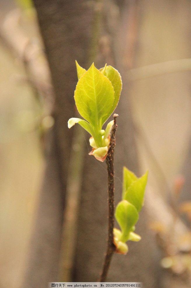 新芽 树干 树枝 嫩芽 嫩叶 绿色 发芽 阳光 花草世界 花草 生物世界