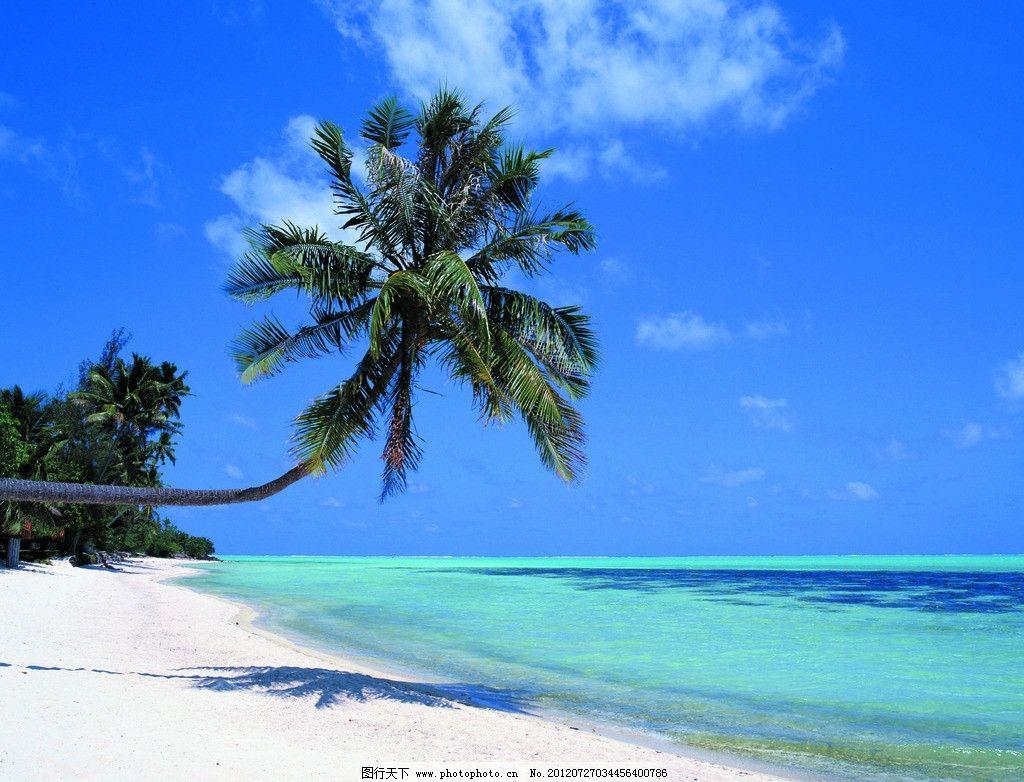 海南 大海 椰子树图片