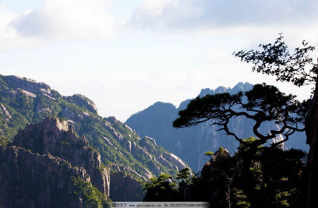 黄山松 松树 山头 摄影