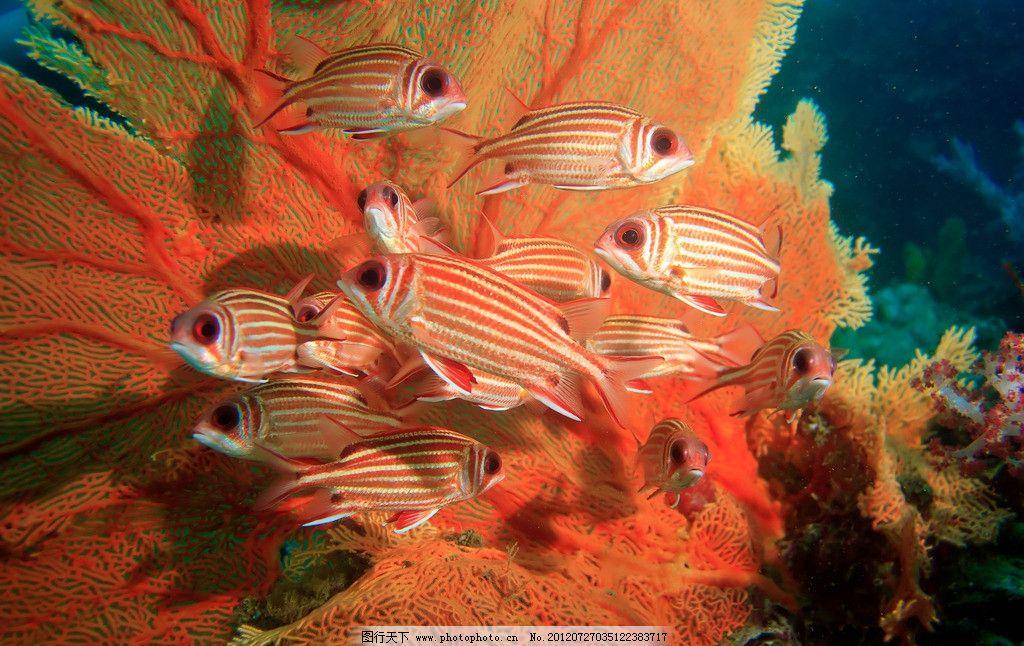 水族馆 海底世界 热带鱼 珊瑚 鱼群 珊瑚虫 珊瑚礁 海洋生物 海底生物