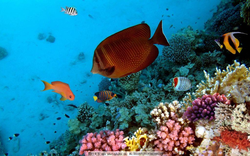 水族馆 海底世界图片