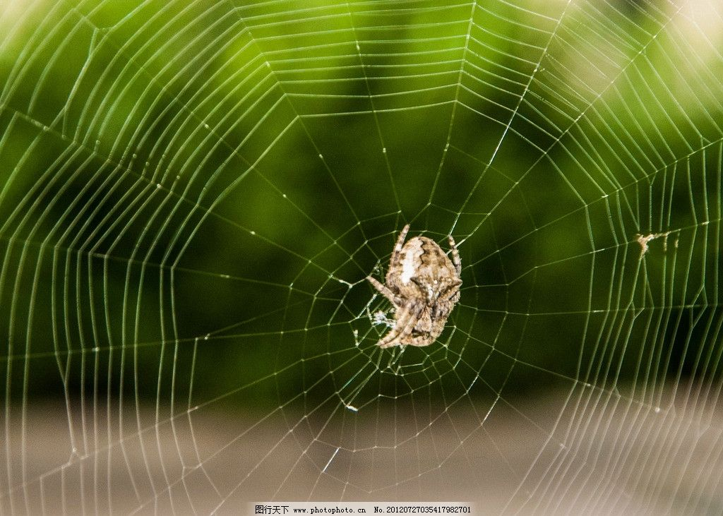 孕妇做梦梦见蜘蛛_梦见被蜘蛛网缠住-梦见别人被蜘蛛网缠住|梦见蜘蛛网缠头|梦见 ...