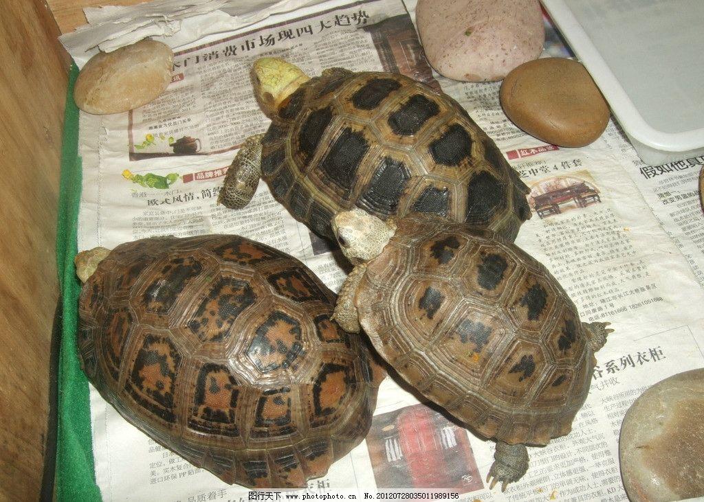 缅甸陆龟图片_野生动物