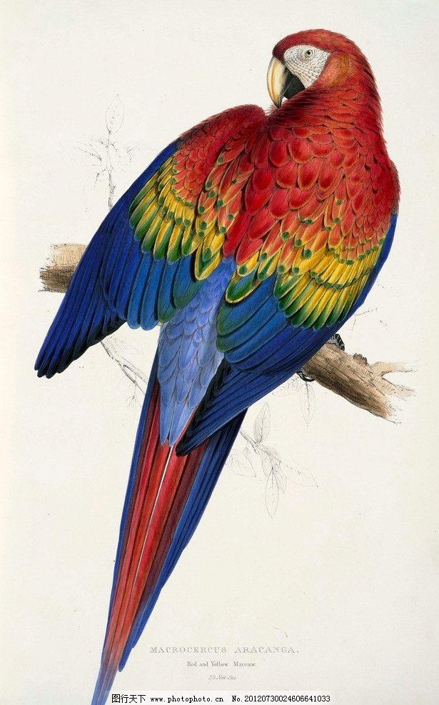 鹦鹉 鸟类 绘画 彩色 工笔画 生物世界 设计 200dpi jpg