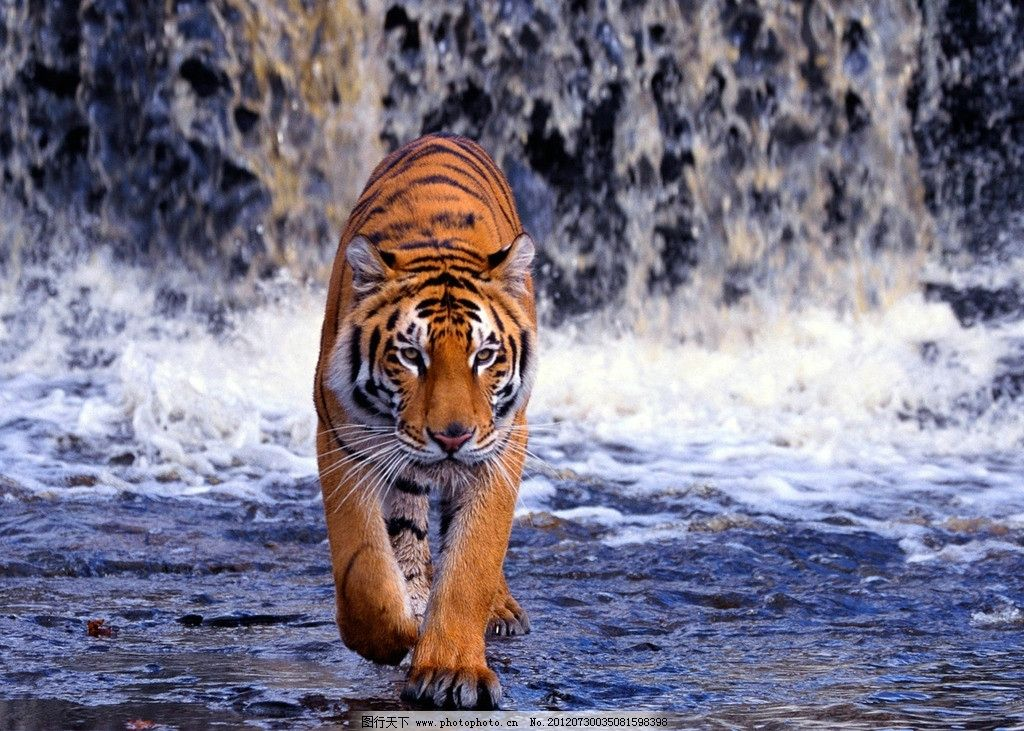 蜜蜡牌子雕刻老虎