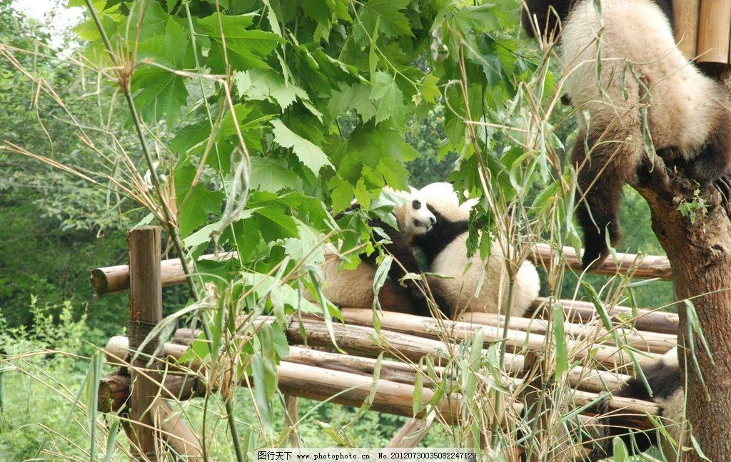 成都郊外动物园图片