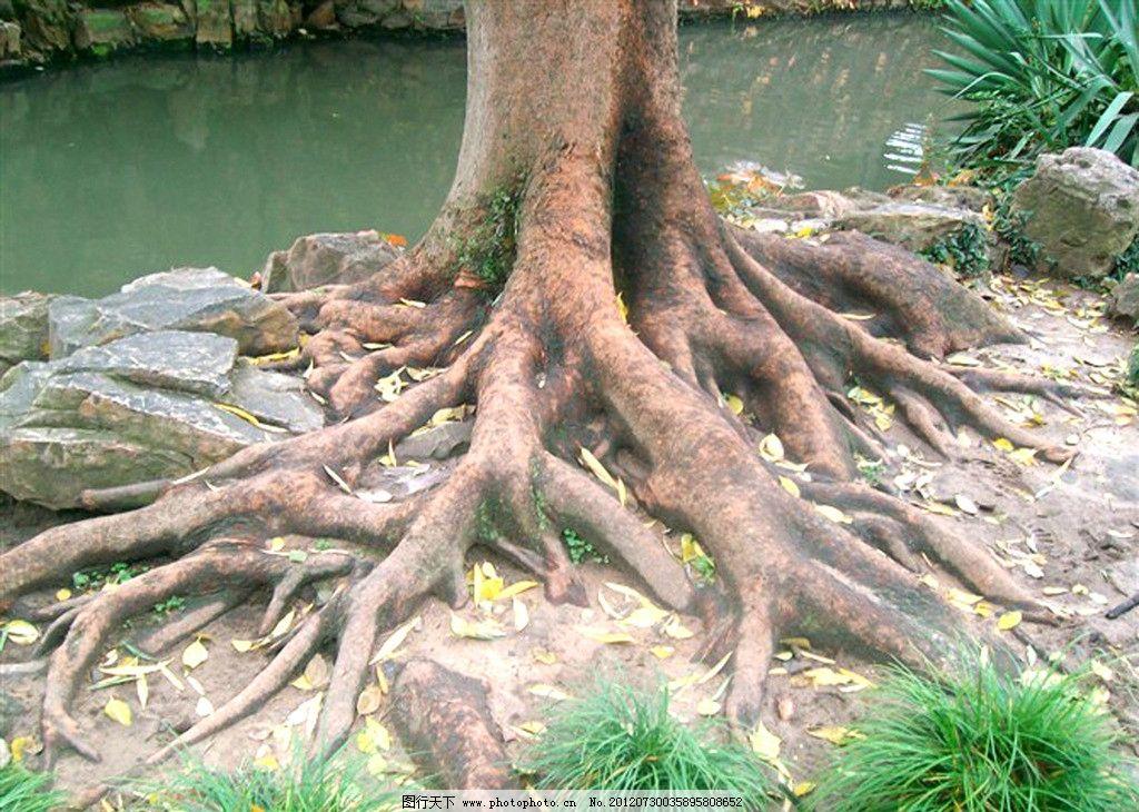 树根 苏州园林 园林景观 旅游景点 树木 树木树叶 生物世界 摄影 96