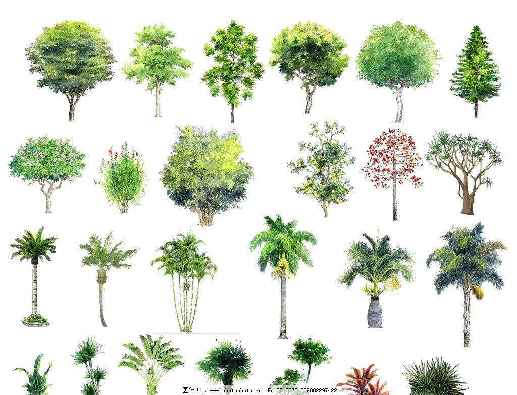 手绘树素材 手绘树 手绘素材 棕榈树 榕树 椰子树 海枣树 散尾葵 皇后