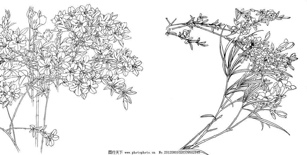 花卉白描 线描 白描 花卉 手绘 黑白 素描 花边花纹 底纹边框 设计 72