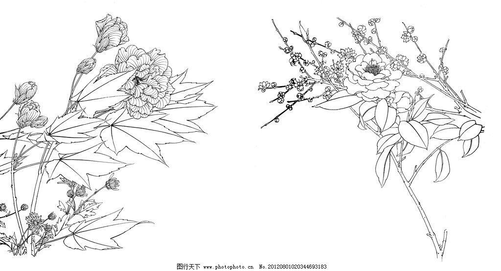 花卉白描 线描 茶花 蜀葵 手绘 黑白 素描 花边花纹 底纹边框