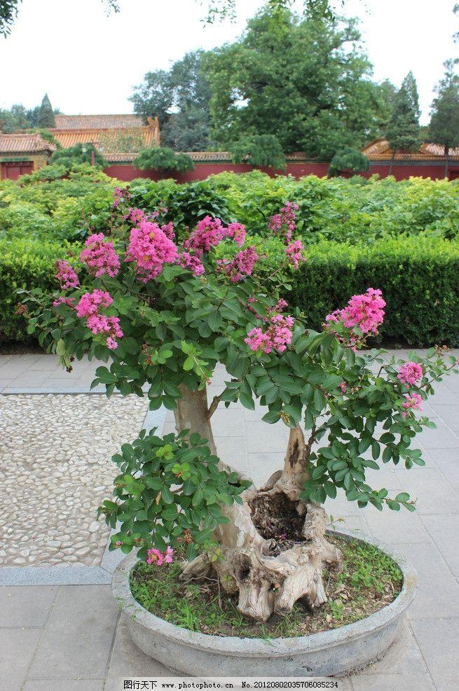 花卉树木图片名称