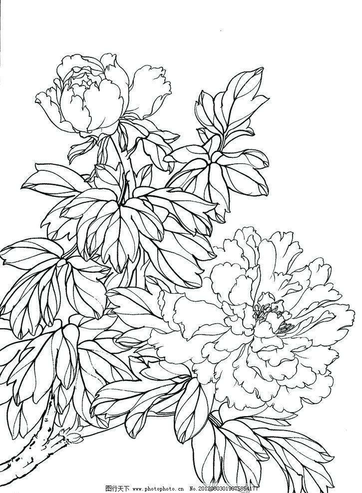 工笔画线描牡丹 花 白描画稿 画稿 线条 书法欣赏 绘画书法 文化艺术