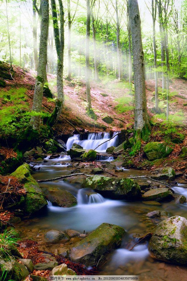 美麗 風景 風光 美景 壁紙 桌面 墻紙 大樹 小河 小溪 河流 河水 樹林
