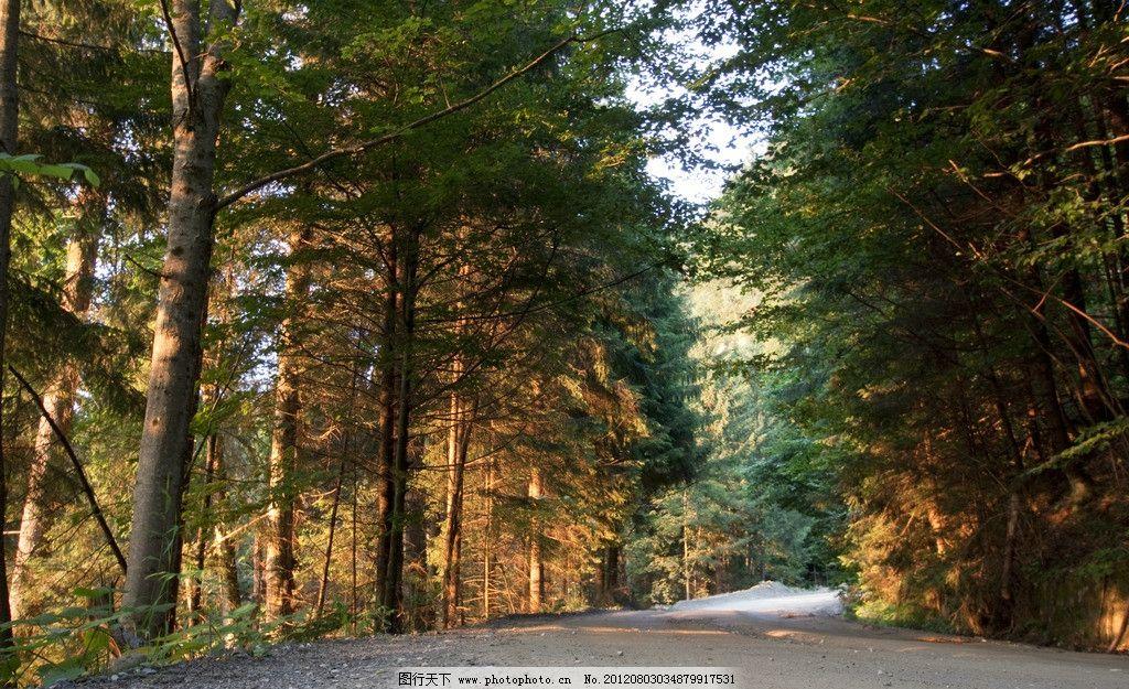 森林风光 森林 大树 树木 树林 风景 风光 美景 风光方面素材 自然