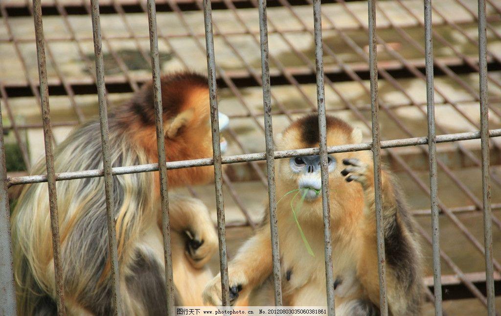 猴子 笼子 生物 动物 摄影