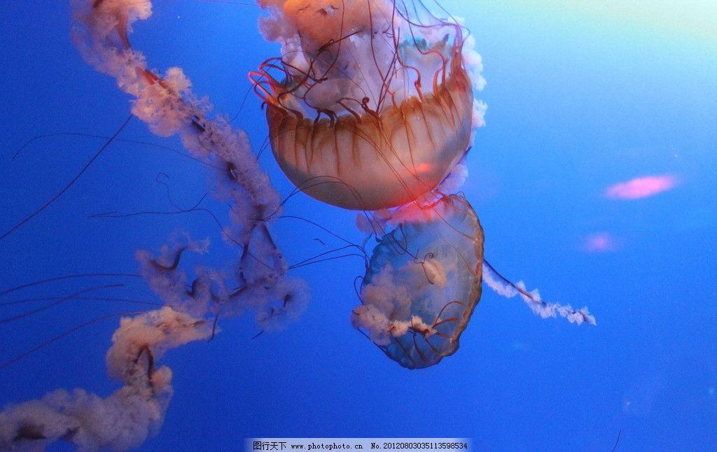 水母 香港海洋公园 自然界 生物 海洋动物 浮游生物 无脊椎动物 腔肠