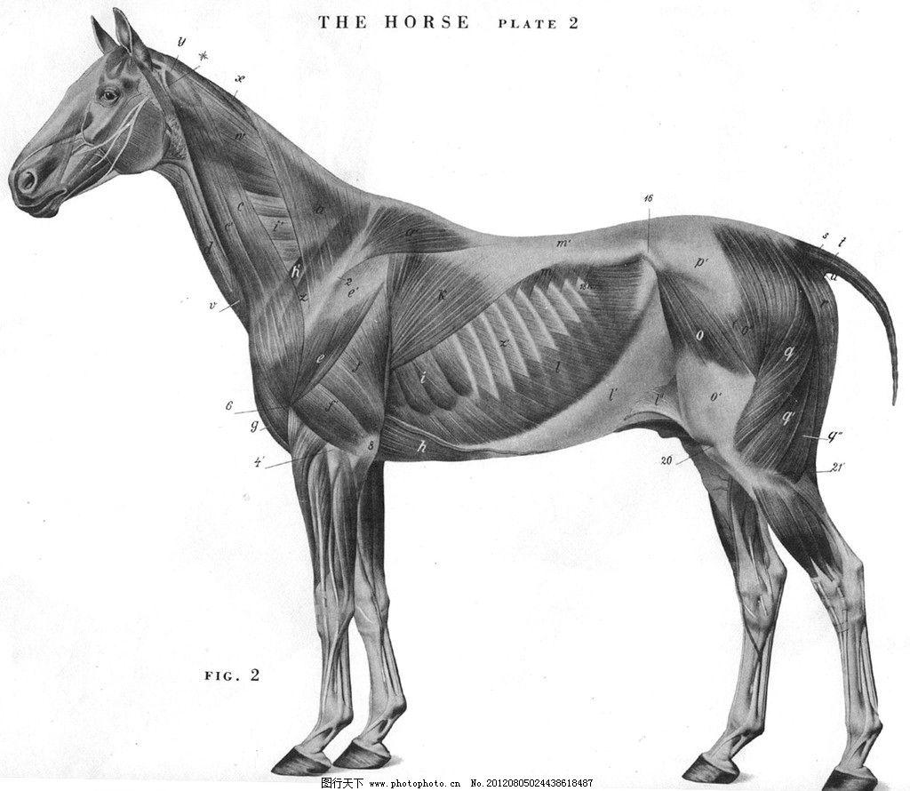 动物结构图图片
