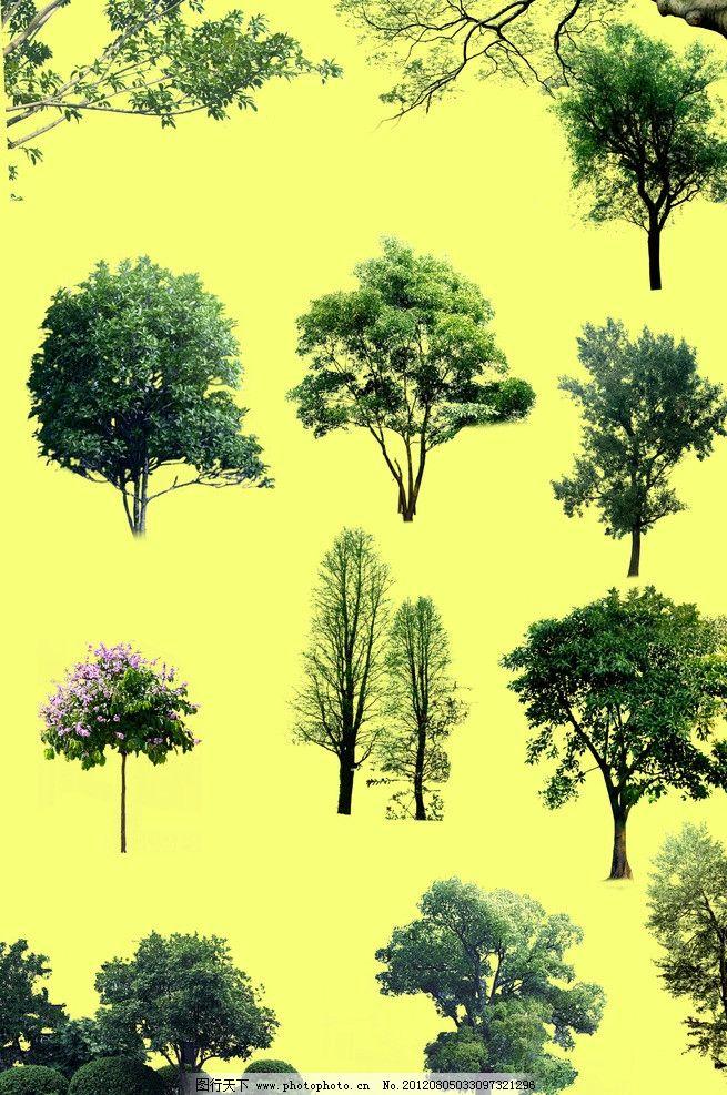立面树木素材 园林 后期处理 立面树木 前景树 psd分层素材 源文件 72