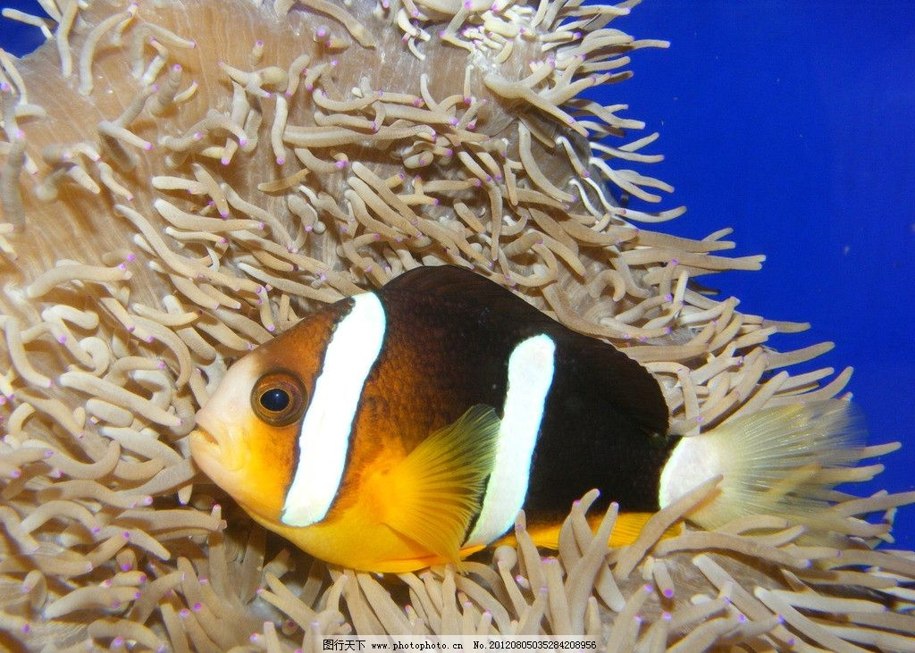 小鱼侧面 鱼儿 海洋 海底世界 鱼类 生物世界 摄影 72dpi jpg