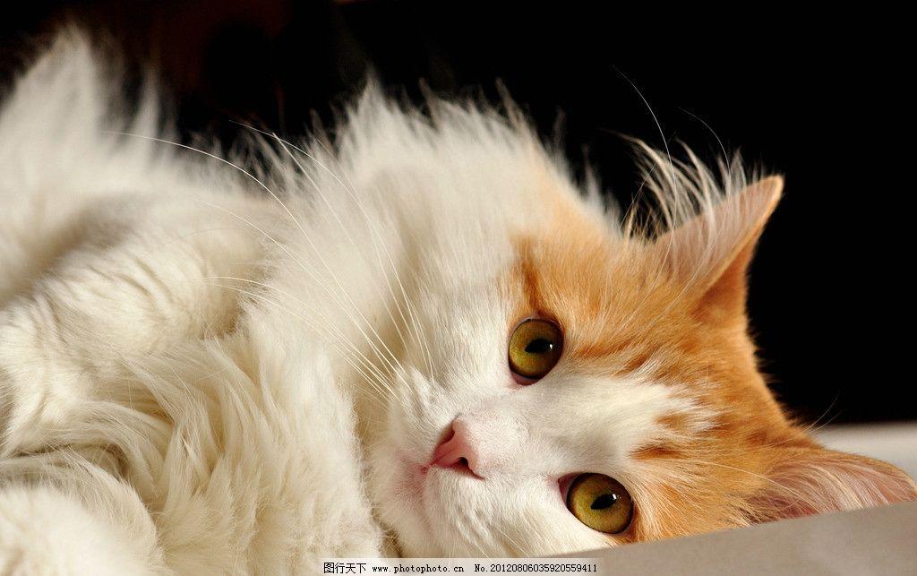 壁纸 动物 猫 猫咪 小猫 桌面 1024_643
