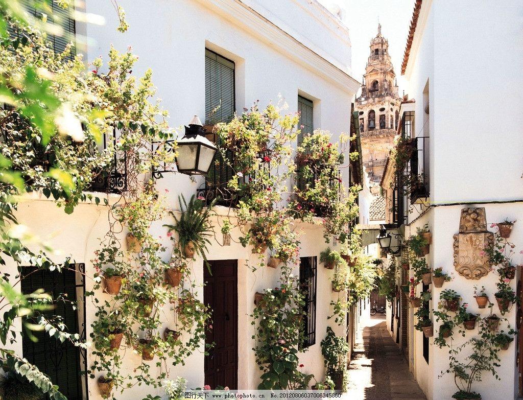摄影图库 生活百科 生活素材  欧洲小镇 西班牙 花卉 花朵 紫色 蔷薇图片