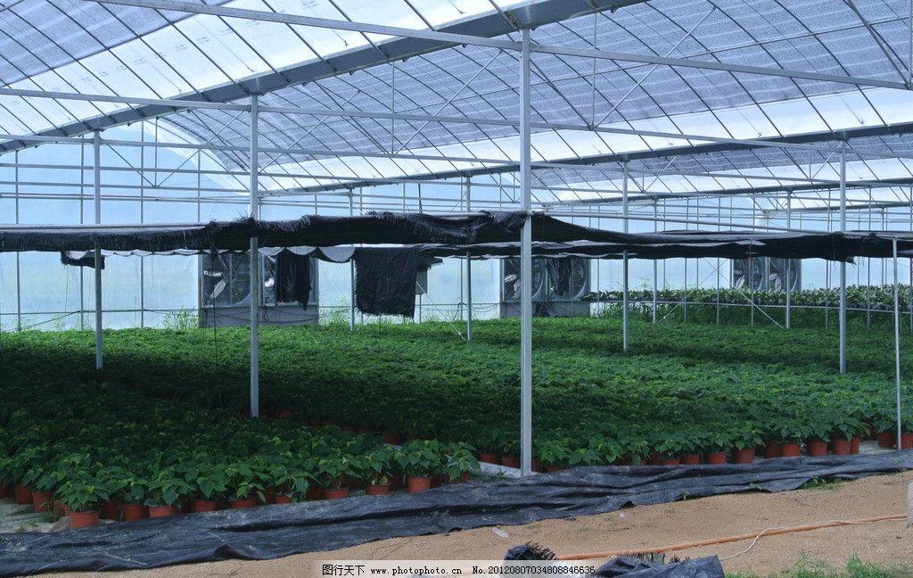 大棚 大棚盆栽 农业 育苗 温室 绿色 玻璃花房 生态 有机 有机农业