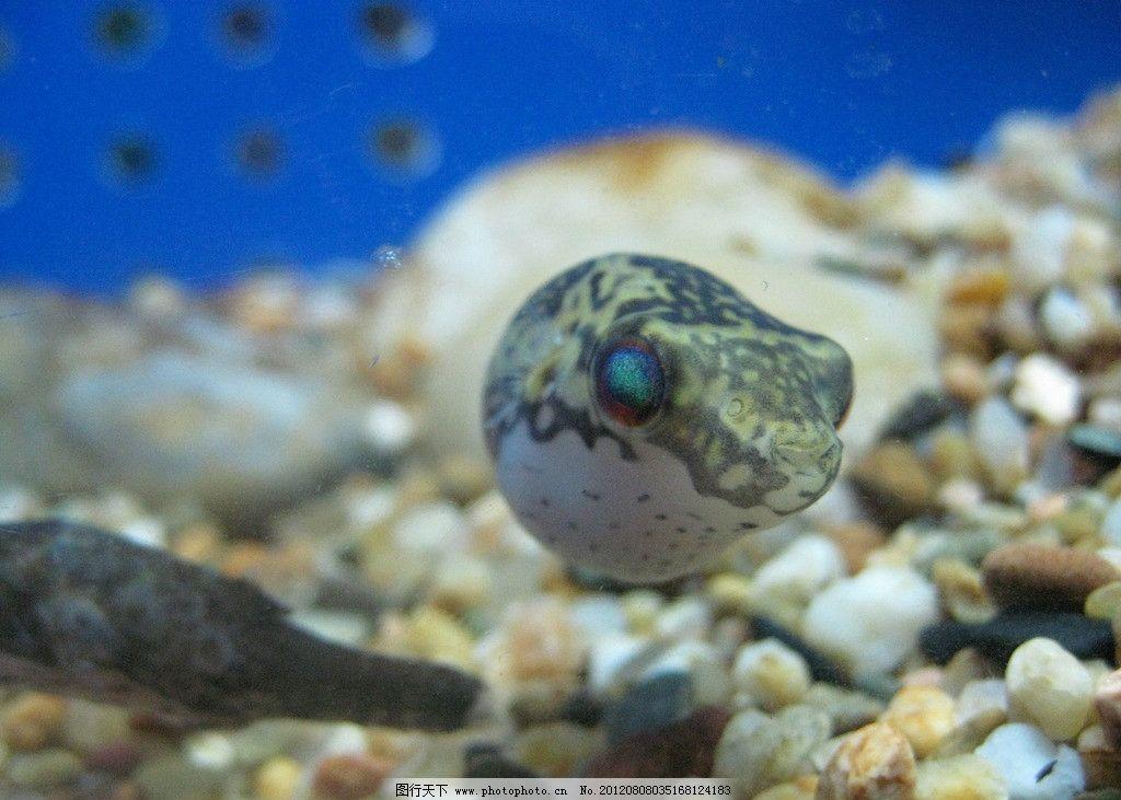 海洋鱼类 小鱼 水族馆 海洋 海洋动物 动物 海洋生物 生物世界 摄影 1