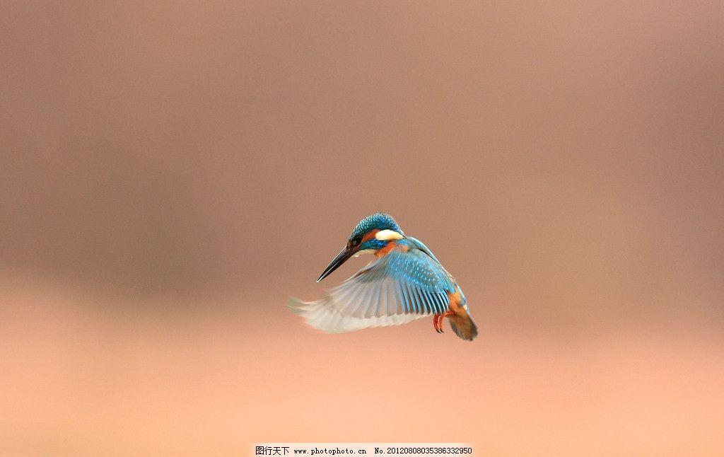 飞鸟 动物 鸟类 飞行 生物世界 摄影 100dpi jpg