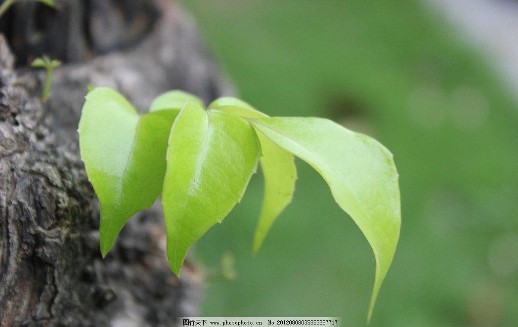 树叶 树木树叶 生物世界 摄影 150dpi jpg