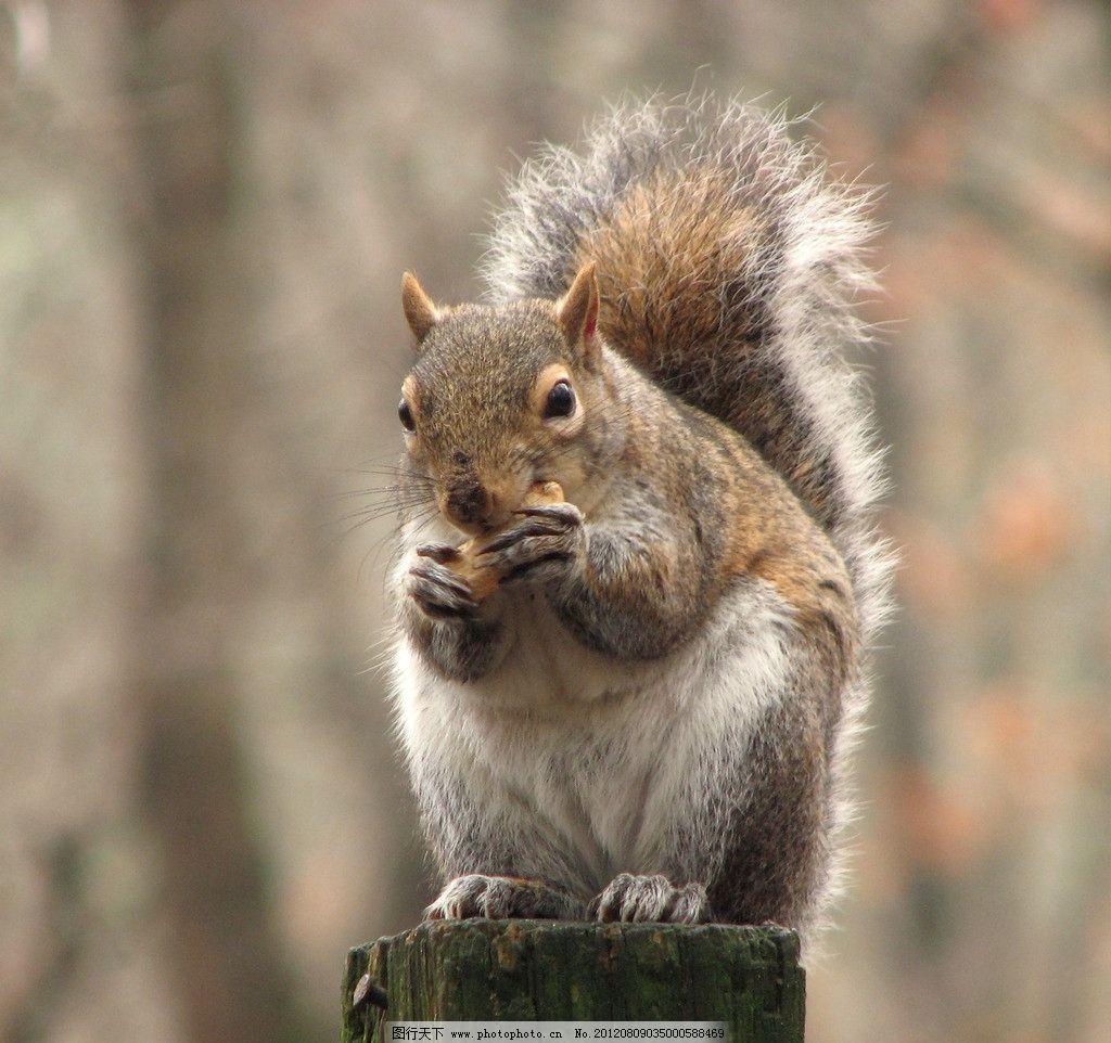 松鼠吃东西 可爱 小动物 觅食 野生动物 生物世界 摄影