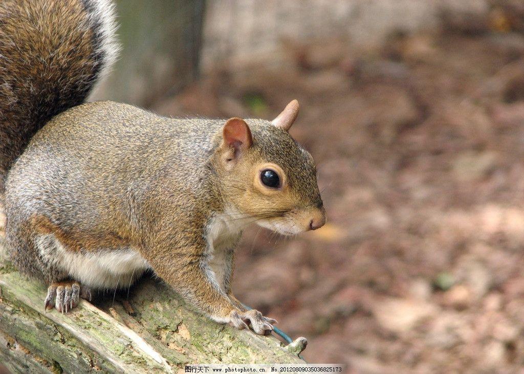 小松鼠 可爱 野生动物 生物世界 摄影
