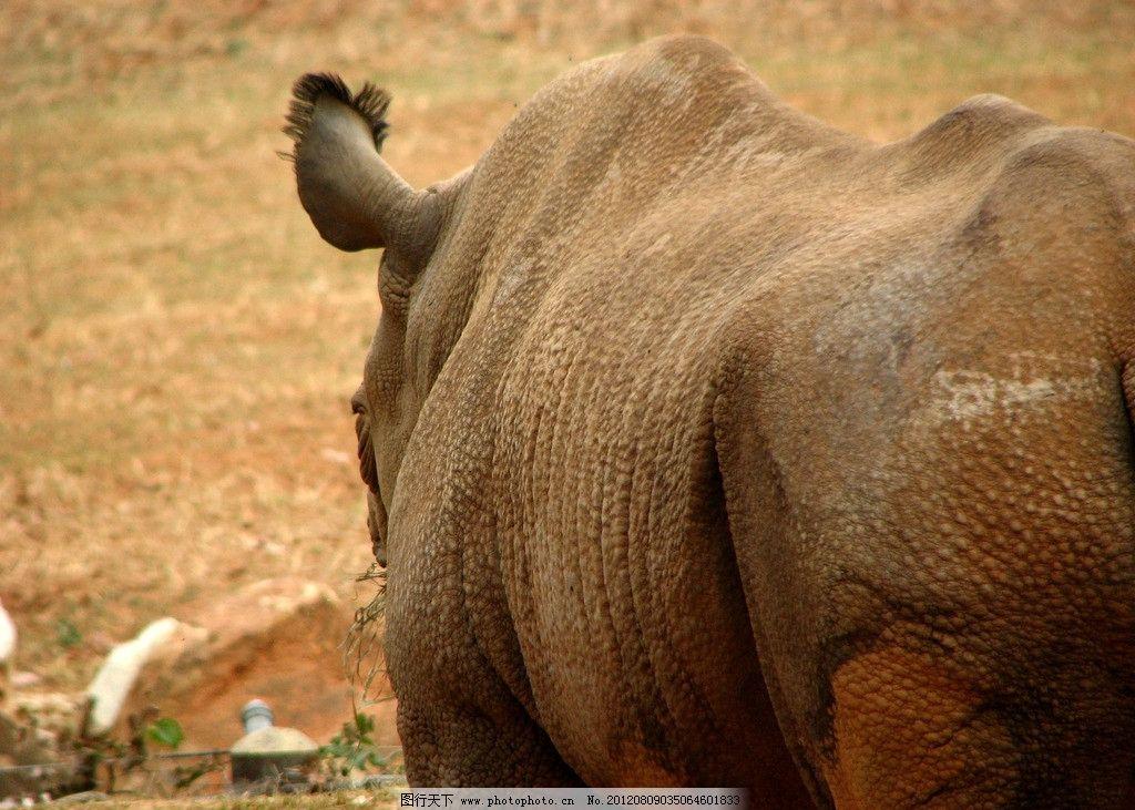 犀牛 野生动物 珍贵 保护动物 动物园 生物世界 摄影