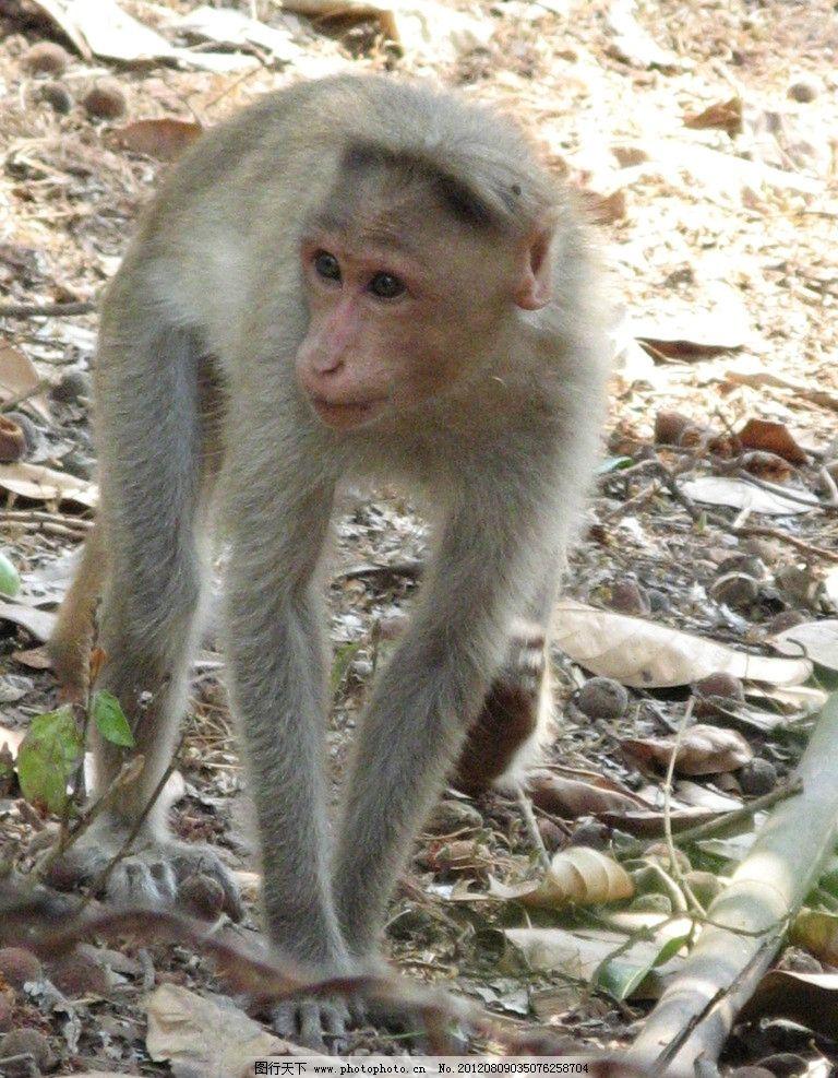 小猴子 可爱 动物 野生动物 保护动物 生物世界 摄影