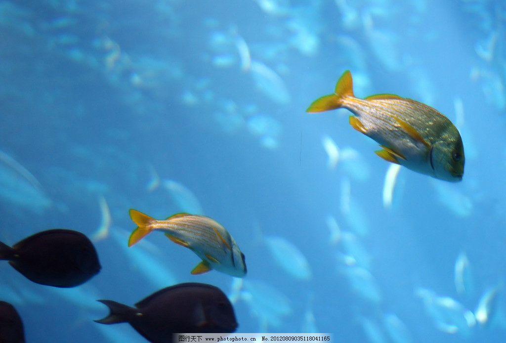 壁纸 动物 海底 海底世界 海洋馆 水族馆 鱼 鱼类 1024_694
