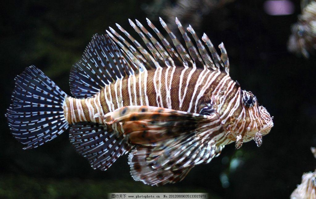 深海鱼 海底 海洋生物 小丑鱼 观赏鱼 生物世界 摄影 350dpi jpg