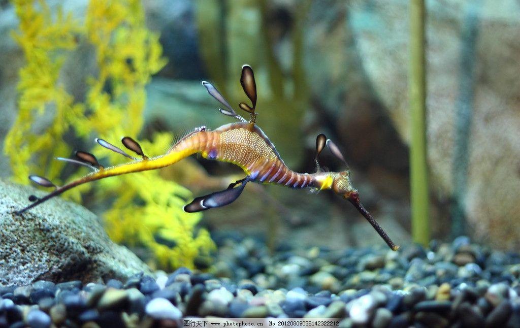 海马 海洋生物 海底世界