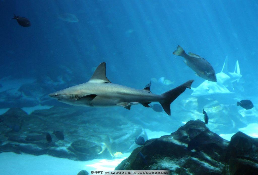 海洋生物 深海世界