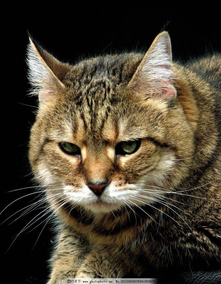 小猫 可爱 宠物 猫咪 动物 家禽家畜宠物 家禽家畜 生物世界 摄影 360
