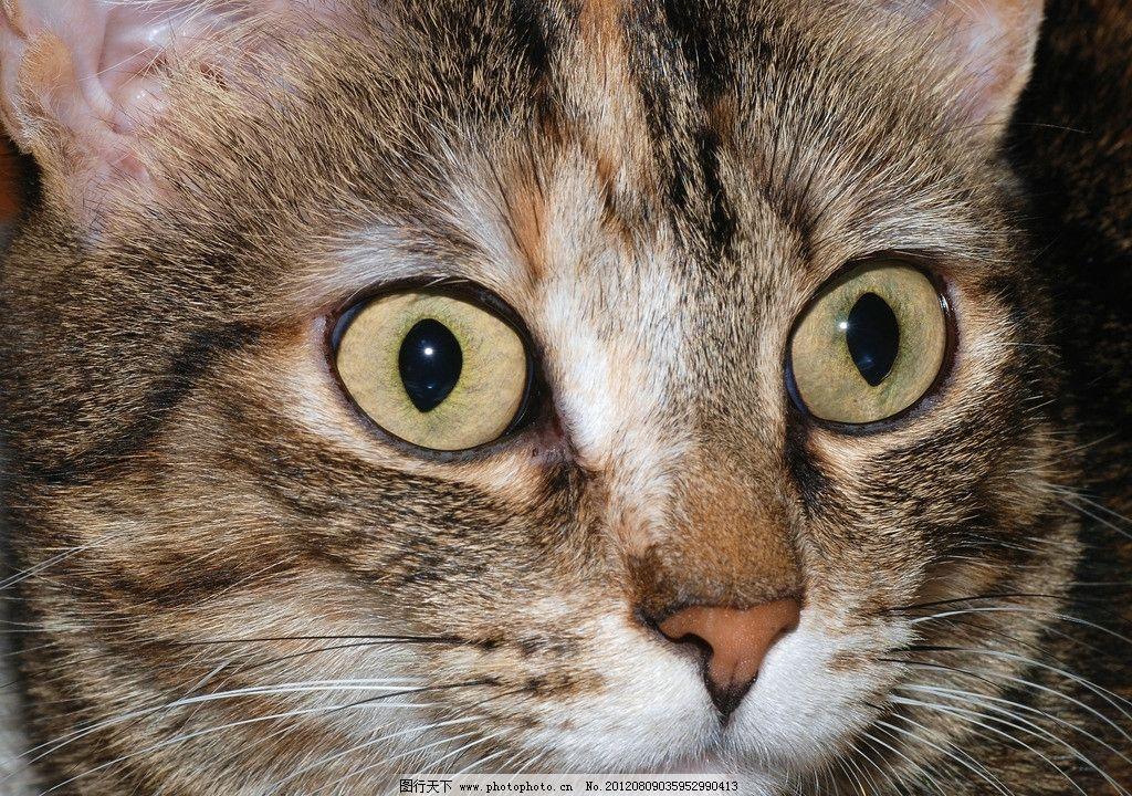 小猫 猫咪 可爱 动物 宠物 家禽家畜宠物 家禽家畜 生物世界 摄影 300