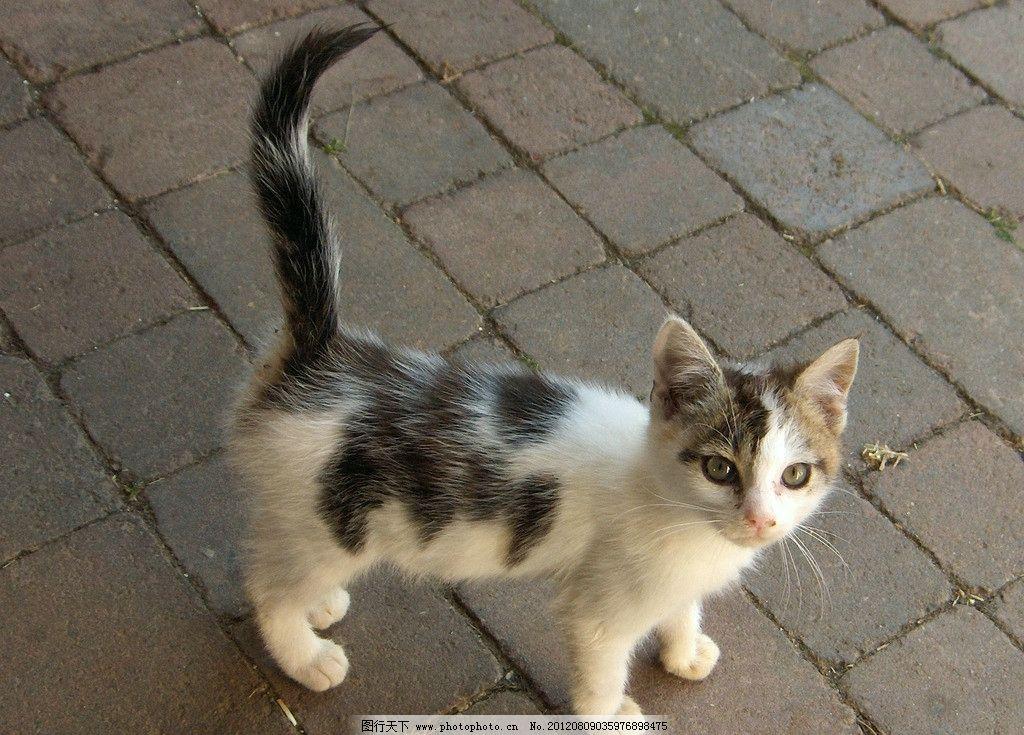 小猫 猫咪 可爱 宠物 家禽家畜宠物 摄影