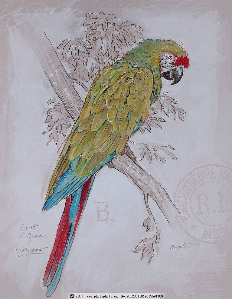 树与鹦鹉 鹦鹉 手绘 装饰画 油画 画芯 绘画书法 文化艺术 设计 350dp