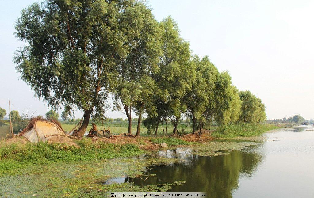 河边的垂柳 水边的垂柳 金陡湖 自然风景 摄影