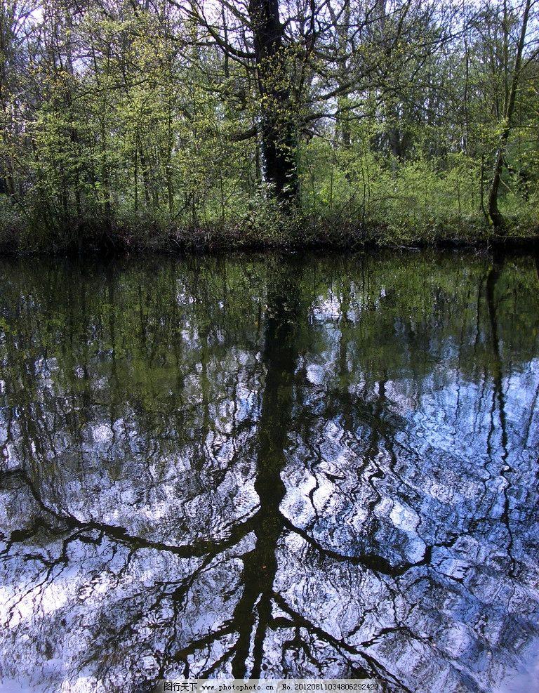 河流沼泽风光 河流 沼泽 风景 风光 美景 大树 树木 树枝 树干 小溪