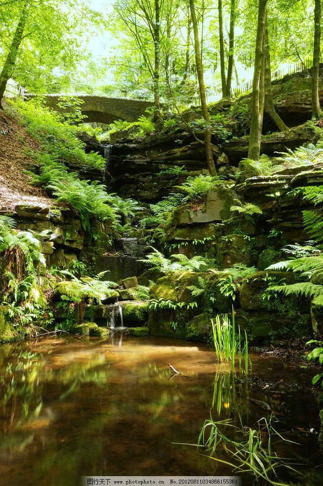 自然风光 自然 风景 风光 美景 景色 景观 森林 大树 树木 河水 池水