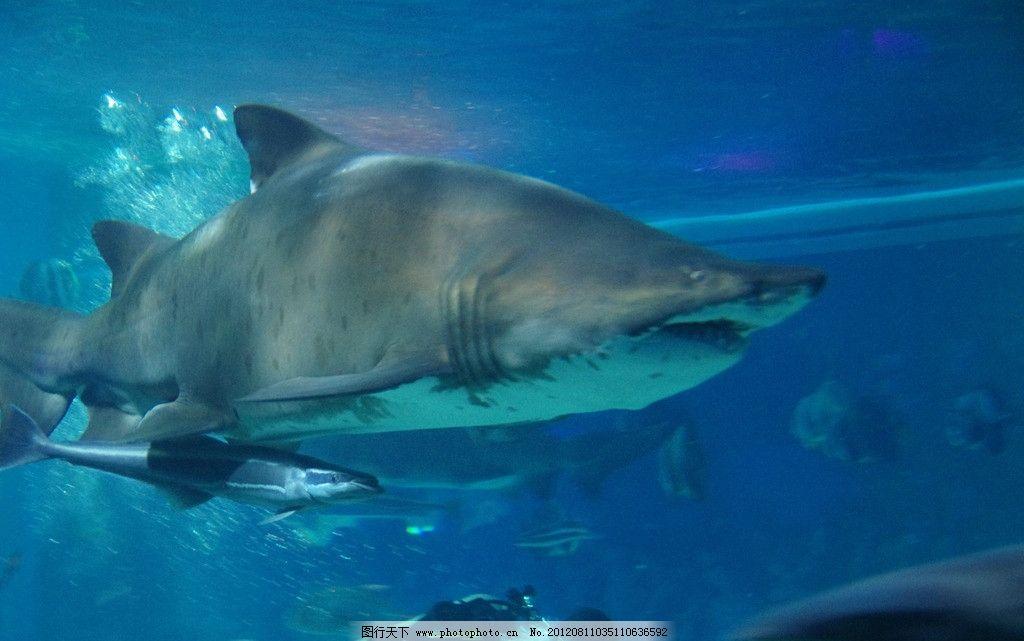 壁纸 动物 海底 海底世界 海洋馆 水族馆 鱼 鱼类 1024_641