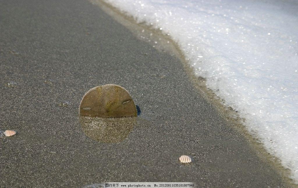 海边贝壳图片