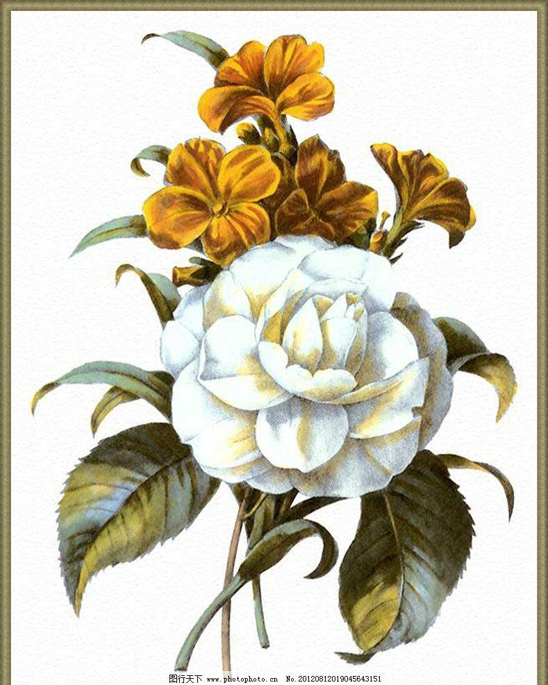 花藤 装饰画 水彩植物 绘画书法 文化艺术 设计 300dpi jpg